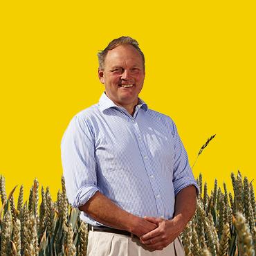 homepage-wheat